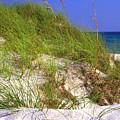 Dunes Trail The Emerald Coast by Thomas R Fletcher