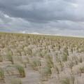 Dunes by Wilko Van de Kamp