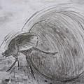 Dung Beetle by Caroline Street