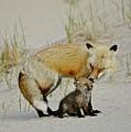 Dunr Fox Father And Child by Susan Ballard