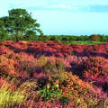 Dunwich Heath I by James Billings