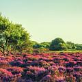 Dunwich Heath II by James Billings