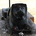 Durga's Lion, Valparai by Jennifer Mazzucco