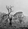 Dusk, Crannoch Woods by Iain Duncan