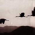 Dusk Flight by Susan Warren