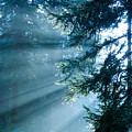 Dusk In Ashenvale by Daniel Csoka