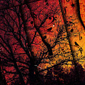 Dusk Song by Gary Bodnar