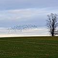 Dusk Tree And Birds by Tana Reiff