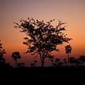 Dusky Tree by Hari Prakkash