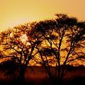 Dusty Sunrise by Adele Van Schalkwyk