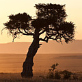 Dusty Sunset Over The Mara by Colette Panaioti
