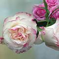 Dutch Frilled Roses by Elaine MacKenzie