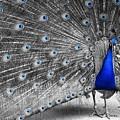 Dutchess by Inali Featherheart