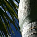 E Hawaii Aloha E by Sharon Mau