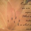 Each Morning We Are Born Again by Teresa Wilson