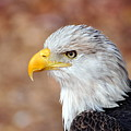 Eagle 10 by Marty Koch