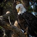 Eagle 2 by Webb Canepa