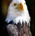 Eagle 23 by Marty Koch