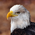 Eagle 25 by Marty Koch
