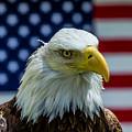 Eagle 3 by Cameron Knudsen