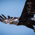 Eagle 3 by Webb Canepa