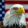 Eagle 6 by Cameron Knudsen