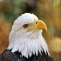 Eagle 9 by Marty Koch