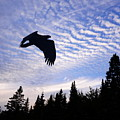 Eagle At Dawn by Harry Moulton