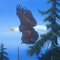 Eagle At Treetop Level by Michael Allen