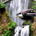 Eagle By The Waterfall by Constance Woods