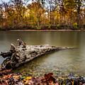 Eagle Creek Park by Ron Pate
