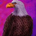 Eagle Crimson Skies by Nick Gustafson