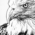 Eagle Drawn by Alice Gipson