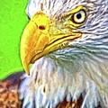Eagle Eye by Alice Gipson
