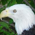 Eagle Eye by Bill Cannon