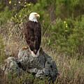 Eagle Eye  by Don Henderson