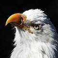 Eagle Eye by Kathy Ax