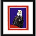 Eagle Eye by Shirley Moravec