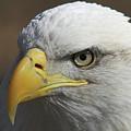 Eagle Eye by Steve Stuller