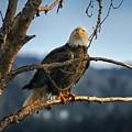 Eagle Eyed by Philip Kuntz