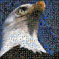 Eagle by Gilberto Viciedo
