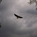Eagle In An Angry Sky by James Jones