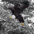Eagle In Flight by Britt Runyon