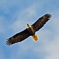 Eagle In Flight by Don Solari