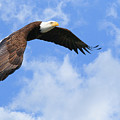 Eagle In The Clouds by Steve McKinzie