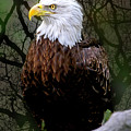 Eagle In The Night by Janet Argenta