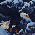 Eagle In The Storm by Lori Mahaffey
