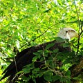Eagle In The Tree by Helen Barth