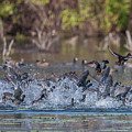 Eagle Induced Chaos by Ronnie Maum
