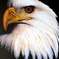 Eagle by Jon Quinn